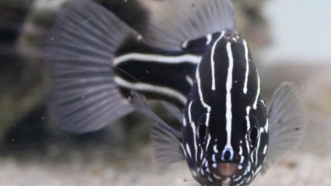毒のある海の生き物